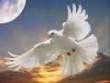 81225-my-peace2